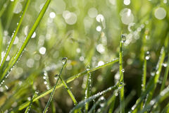 Herbe verte avec des baisses de l'eau Image libre de droits