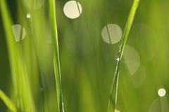 Herbe verte avec des baisses de l'eau Photos stock