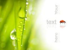 Herbe verte avec des baisses de l'eau Photo libre de droits
