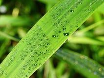 Herbe verte avec des baisses de l'eau, Lithuanie Photo stock