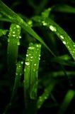 Herbe verte avec des baisses de watter Photo libre de droits
