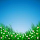 Herbe verte avec des fleurs sur le fond bleu, illustration de vecteur illustration libre de droits