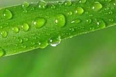 Herbe verte avec des gouttes de pluie Images libres de droits
