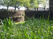Herbe verte avec l'esprit de marguerites la fortification à l'arrière-plan Images stock