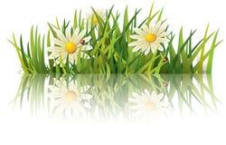 Herbe verte avec la coccinelle Image stock