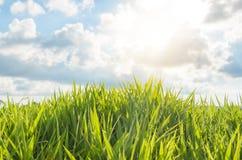 Herbe verte avec la lumière du jour Photos stock