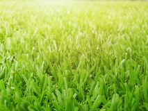 Herbe verte avec la lumière du soleil sur le fond naturel Photographie stock libre de droits