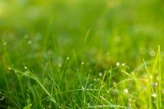 Herbe verte avec la rosée à la lumière du soleil image stock