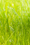 Herbe verte avec la rosée de matin photo stock