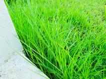 Herbe verte avec le bâtiment blanc en journée image libre de droits