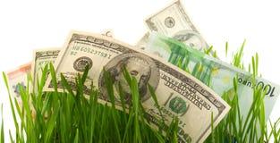 Herbe verte avec le dollar et l'euro d'isolement Photographie stock libre de droits