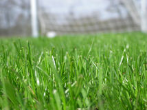 Herbe verte avec le filet du football Images stock