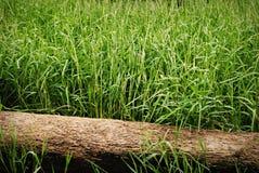 Herbe verte avec le logarithme naturel Photo libre de droits