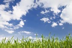 Herbe verte, ciel Photos libres de droits