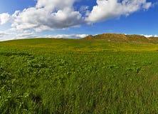 Herbe verte, ciel bleu et nuages blancs Photos libres de droits