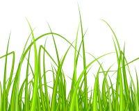 Herbe verte Configuration sans joint Photos stock
