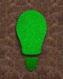 Herbe verte d'ampoule sur le fond rouge de sol Photo libre de droits