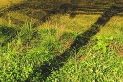 Herbe verte d'automne avec des feuilles le soir photo libre de droits
