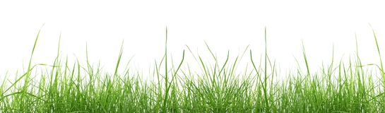 Herbe verte d'isolement. Image stock