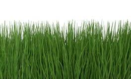 Herbe verte d'isolement sur l'illustration 3d blanche Photographie stock