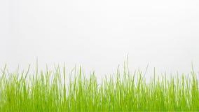 Herbe verte d'isolement sur le blanc Image libre de droits