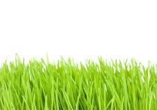 Herbe verte d'isolement sur le blanc Photos stock