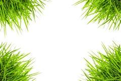 Herbe verte d'isolement sur le fond blanc Images libres de droits