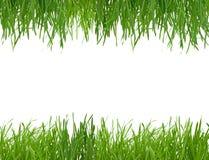 Herbe verte d'isolement sur le fond blanc Photographie stock