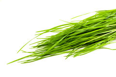 Herbe verte d'isolement sur le fond blanc Photos stock