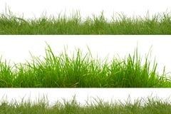Herbe verte d'isolement sur le fond blanc Images stock