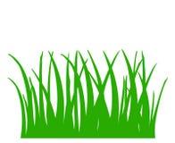 Herbe verte d'isolement sur le fond blanc Image stock