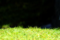 Herbe verte d'isolement sur le fond noir photos stock