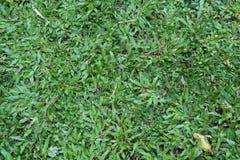Herbe verte dans la cour photos stock