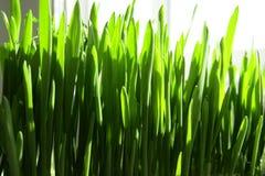 Herbe verte dans la fenêtre Image stock