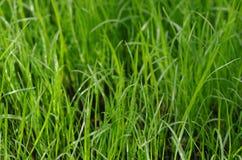 Herbe verte dans le jardin Photo stock