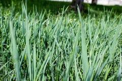 Herbe verte dans le jardin photo libre de droits