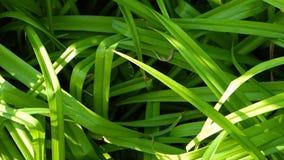 Herbe verte dans le jour ensoleillé d'été clips vidéos
