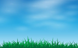 Herbe verte dans un ciel bleu Image libre de droits