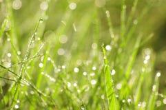Herbe verte dans une rosée photo stock