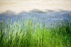 Herbe verte dans une vallée de montagne au coucher du soleil Photos stock