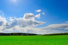 Herbe verte de ciel bleu Images libres de droits