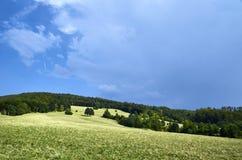 Herbe verte de ciel bleu Photographie stock