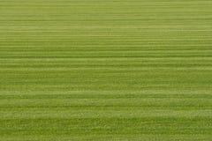 Herbe verte de gazon de fond Image libre de droits