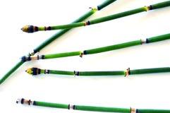 Herbe verte de marais sur un fond blanc Fond Photo libre de droits