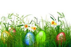 Herbe verte de Pâques Photographie stock libre de droits