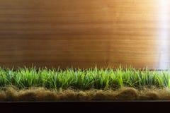 Herbe verte de ressort au-dessus du fond en bois de barrière Vue d'angle faible d'herbe fraîche avec l'espace de copie pour le te Images stock