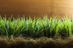 Herbe verte de ressort au-dessus du fond en bois de barrière Vue d'angle faible d'herbe fraîche avec l'espace de copie pour le te Photos libres de droits