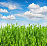 Herbe verte de ressort avec des baisses de l'eau Escroquerie d'environnement et d'écologie Photos libres de droits