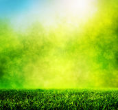 Herbe verte de ressort contre la tache floue naturelle de nature Photos libres de droits