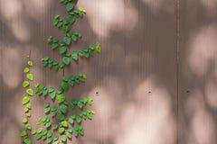 Herbe verte de ressort frais et usine de feuille au-dessus du backgrou en bois de barrière Images stock